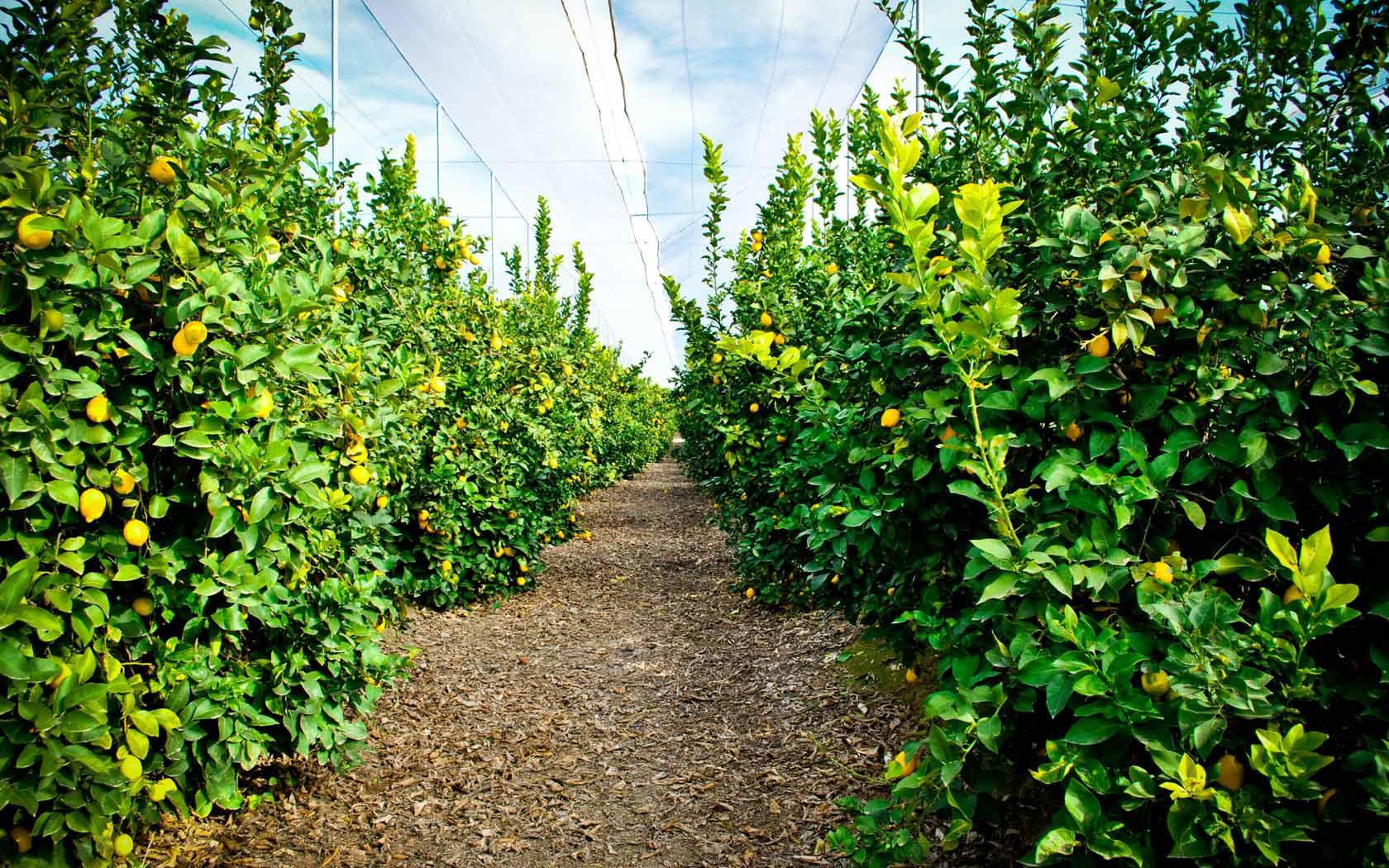 Unicaja redobla su apuesta por el sector agrario con más de 400 millones