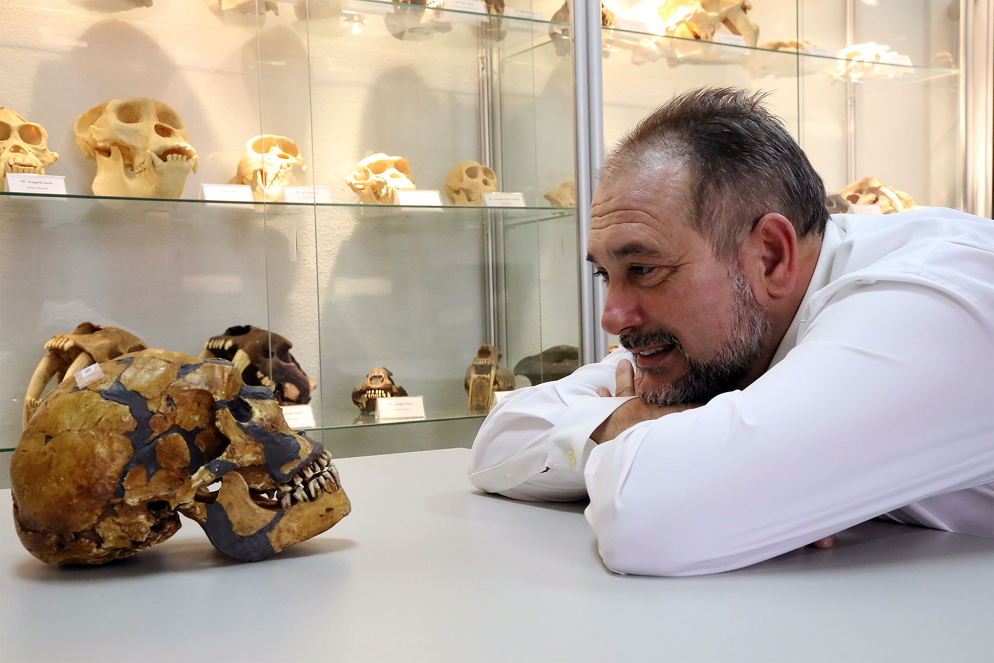 La UMA cuenta con una de las colecciones de cráneos de homínidos más completas del mundo