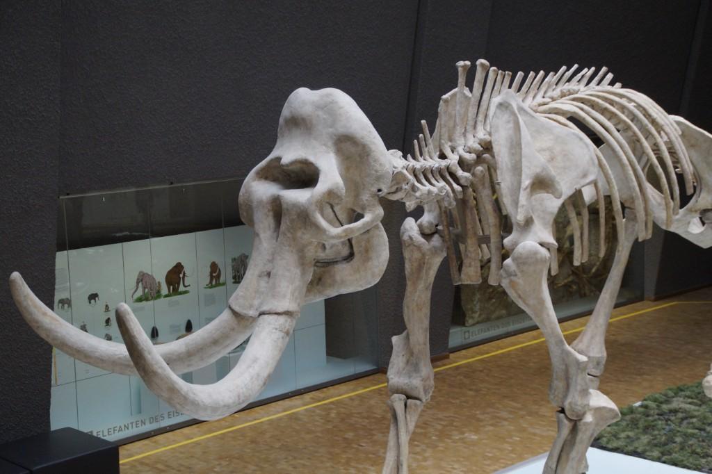 Un equipo de paleontólogos de la UMA describe la dinámica evolutiva de los mamíferos norteamericanos