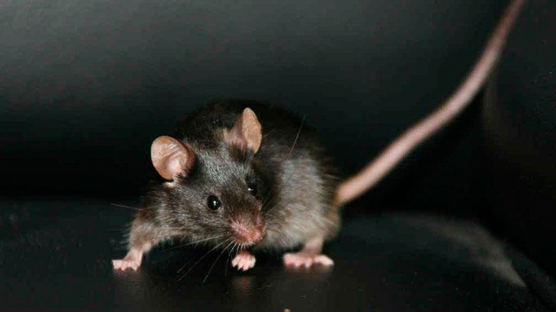 CSIF alerta de la presencia de roedores en el Juzgado de Primera Instancia 5 de Marbella