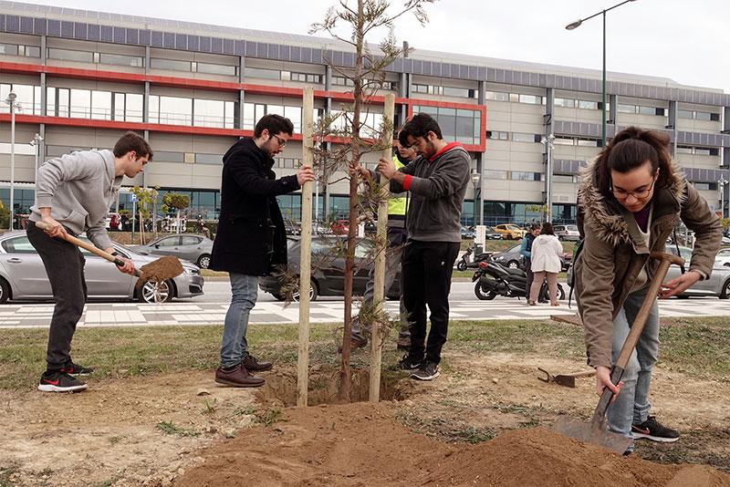 La UMA comienza el año plantando árboles autóctonos en el campus de Teatinos