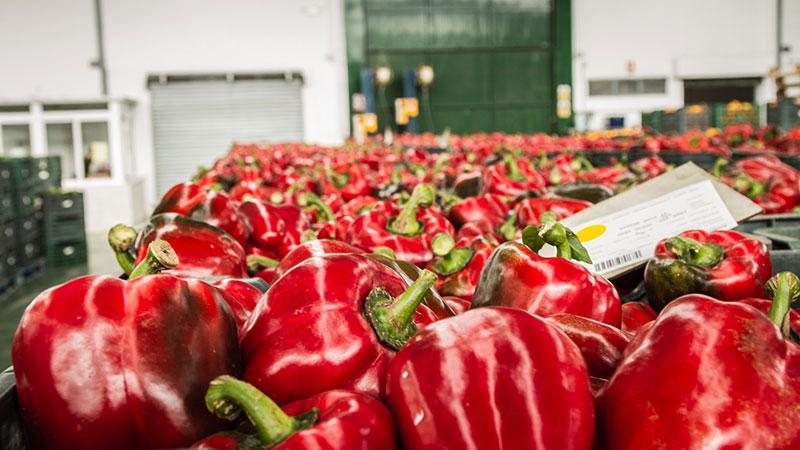 El sector agroalimentario andaluz inicia 2020 con más de 1.000 millones en exportaciones, un 2 por ciento más