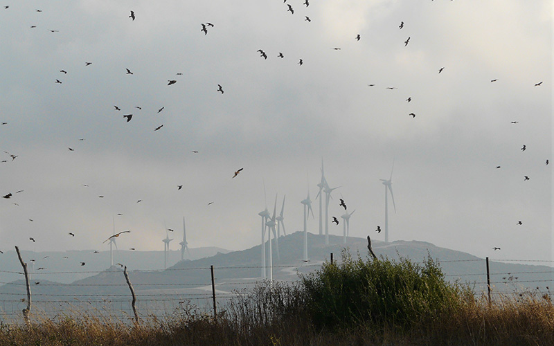 Estudian las migraciones de aves en el Estrecho de Gibraltar para situar los parques eólicos