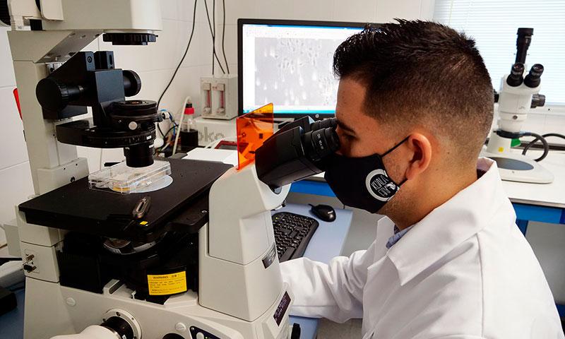 Generan un tipo de célula del cerebro clave para el mantenimiento de la actividad neuronal