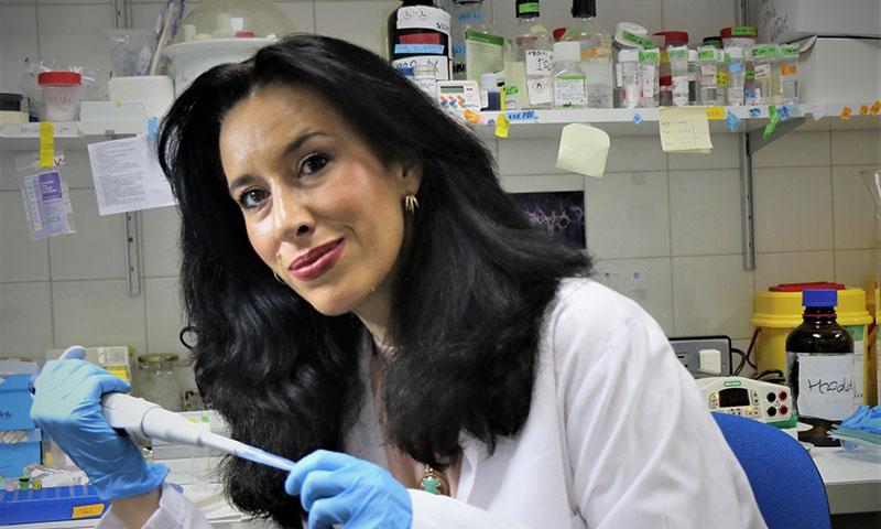 Identifican el grafeno oxidado y sus derivados como el material idóneo para generar soportes celulares en medicina regenerativa