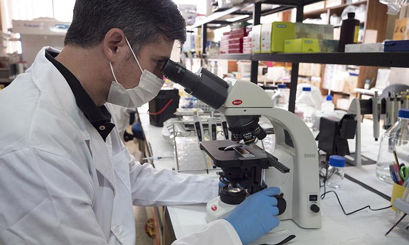 Desarrollan un nuevo modelo que reproduce los mecanismos celulares y moleculares del Alzheimer esporádico